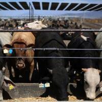 Nuevos criterios para que los ganaderos de Chihuahua exporten ganado a EE. UU.