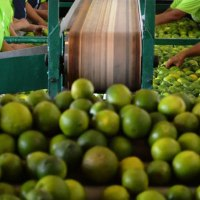 Sanidad e inocuidad, prioridades para México dentro del T - MEC