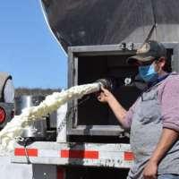Liconsa debe y productores tiran 38 mil litros de leche