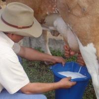 Se prepara movilización de ganaderos para exigir mejor precio al pago de su leche
